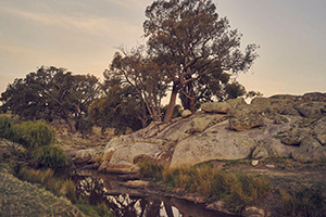 Mimosa Glen - Wedding Venue Country Victoria